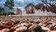 Wat Yai Chom Prasat
