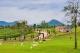 Scenery Resort