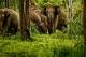 อุทยานแห่งชาติกุยบุรี