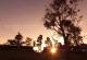 Kear Forest (Mae Taman)
