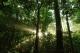 Tai Rom Yen National Park