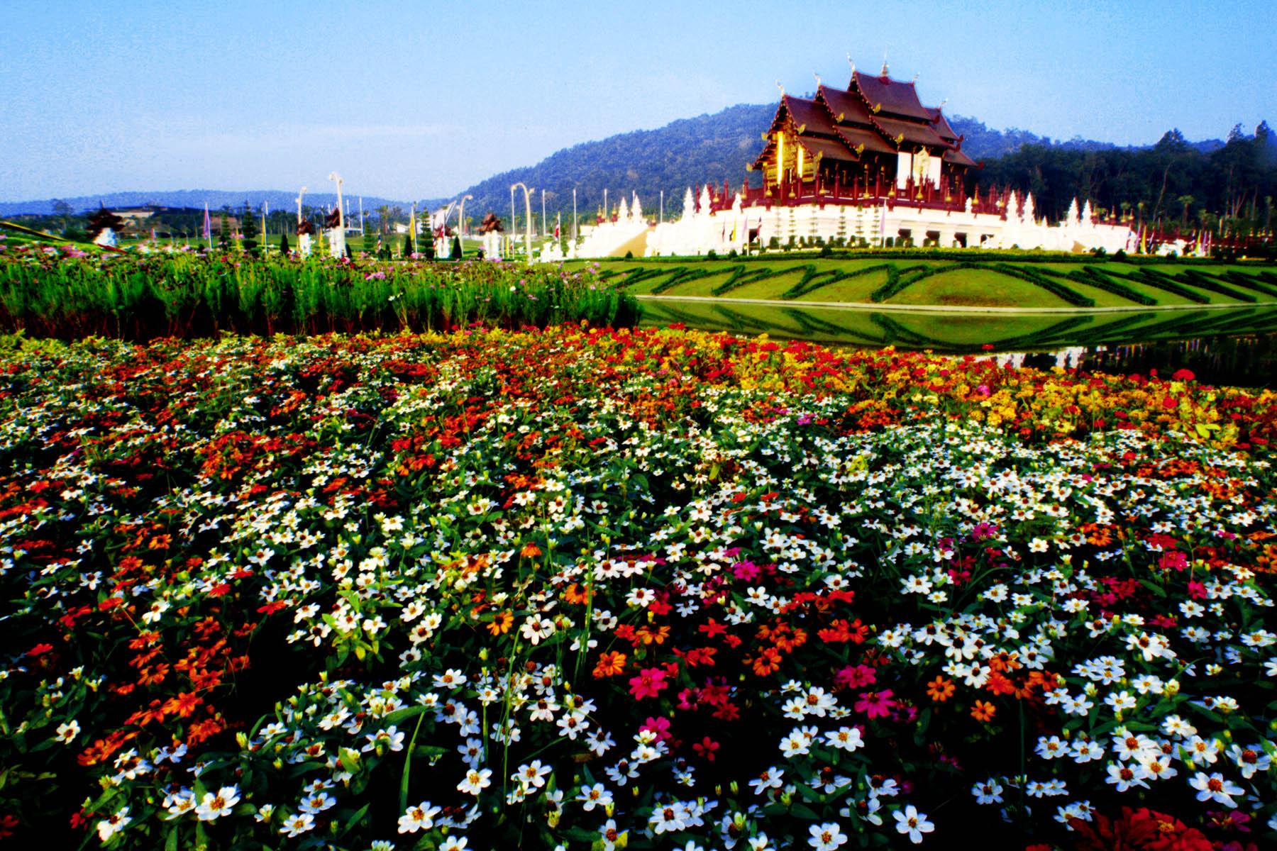 เทศกาลชมสวนอุทยานหลวงราชพฤกษ์